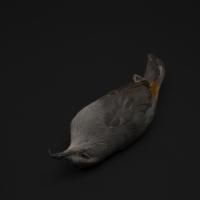 Fallen Catbird 5/18/07, 8.45am found Lower East Side 23